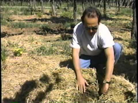 Agroecología en Acción.