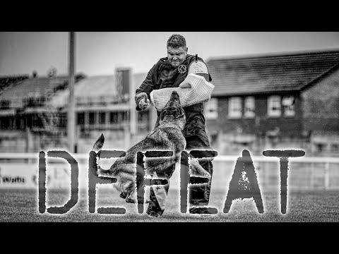 DEFEAT Dog Sport Inspiration Motivation Video WUSV Universal Sieger 2019 Compilation
