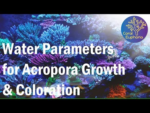 Reef Tank Parameters For Good SPS Growth & Color