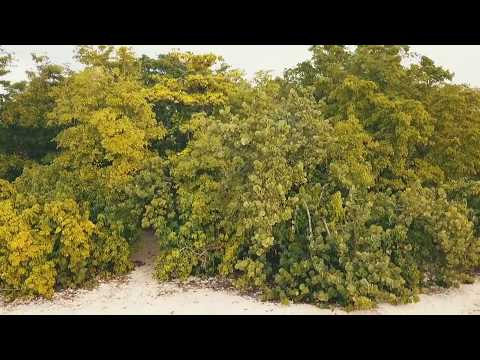 Ile du Gosier, MUST SEE Guadeloupe Beaches, WEST INDIANS, drone footage, 2018