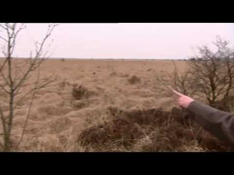 Vroege Vogels TV: Klapekster