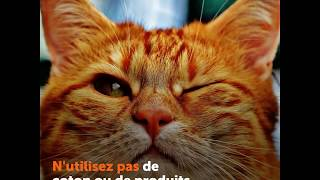 Infections de l'œil chez le chat  - Ooreka.fr
