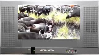 Буйволы убивают льва(Африканская дикая природа Дикая природа Серенгети Дикие животные Слон нападает на людей Видео атаки слона..., 2014-06-02T08:16:05.000Z)