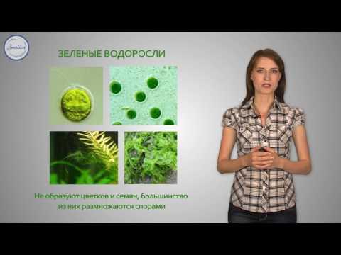 Как питаются водоросли 7 класс