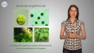 Биология 6 Низшие растения водоросли