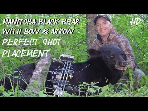 Black Bear Arrow Placement Perfect On Manitoba Bow Hunt Where To