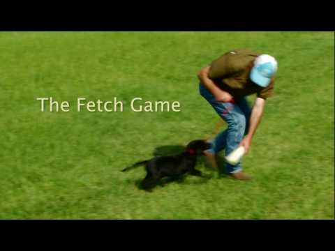 The Fetch Game