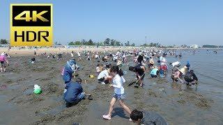 """潮干狩り: Japanese call clam digging at low tide """"shiohigari"""" in Ja..."""