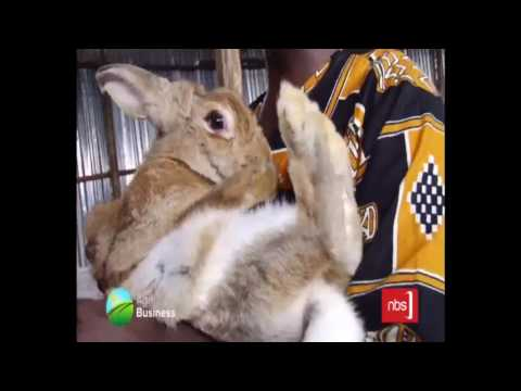 Agri Business - 06 February, 2017 (Rabbit Farming)