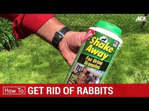 How To Get Rid Of Rabbits - Ace Hardware