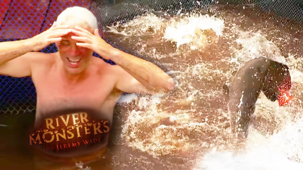 In The Water With 35 Aggressive Arapaima   ARAPAIMA ...