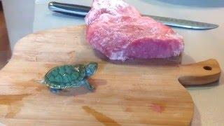 Лайфхак. Корм черепахам своими руками. Часть 2.