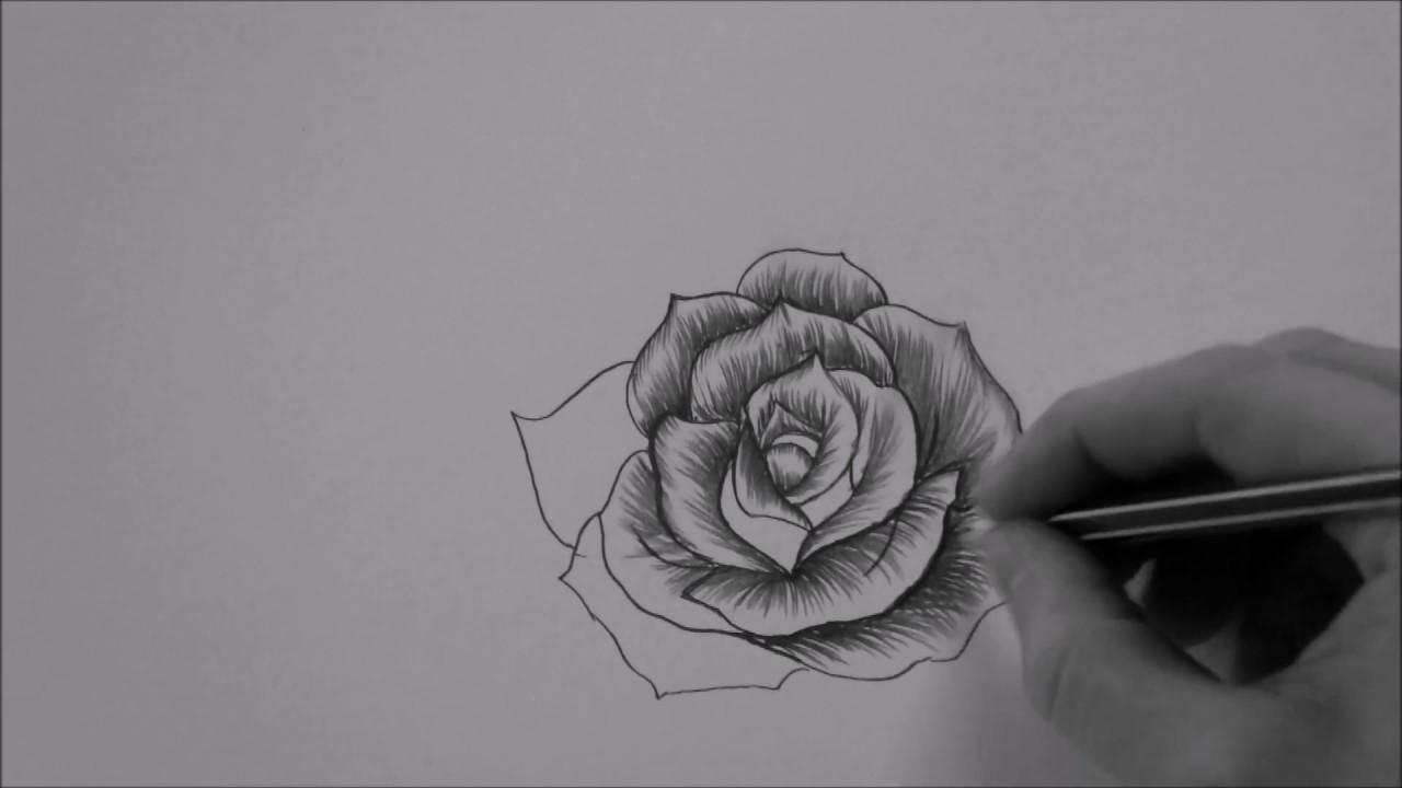 How to draw a Rose In 10 Minutes step by step Real Time ...