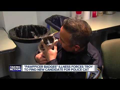 Pawfficer Badges, the Troy Police mascot, falls ill - YouTube