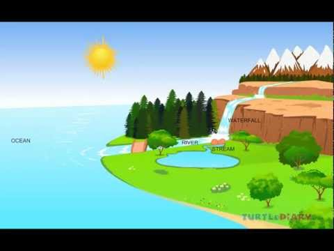 The water cycle | NATURAL SCIENCE #1