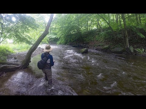 Fly Fishing Trout!!! Fishing For Trout With A Fly.  Primland Va. Brown Trout & Rainbow