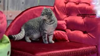 Мебель для кошек в Пятигорске - Дом мебели Арина