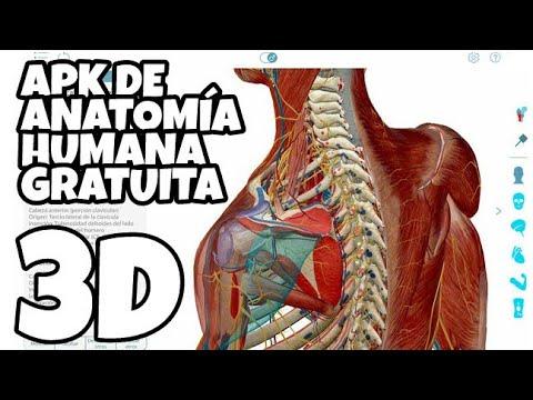 Atlas de Anatomía Humana en 3D Gratis - YouTube