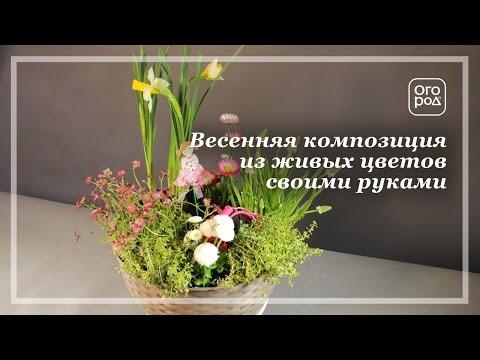 Хочется весны - композиция из весенних цветов