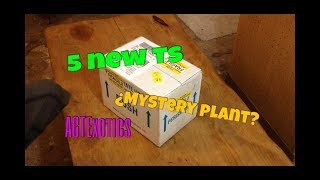 Fear Not Tarantulas Unboxing, 5 New Ts & Mystery Plant found in my Eco Earth!