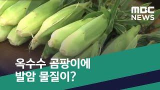 [스마트 리빙] 옥수수 곰팡이에 발암 물질이? (2020.07.13/뉴스투데이/MBC)