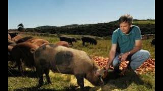 RENDA EXTRA NO SÍTIO (Criação de porcos)