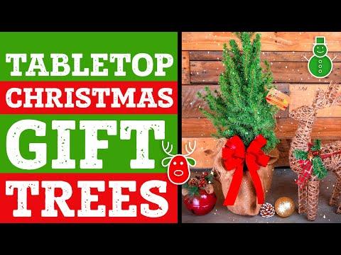 Tabletop Christmas Tree |  Live Tabletop Christmas Tree | Mini Christmas Tree | PlantingTree™