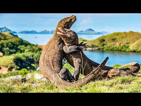 sejarah-taman-nasional-komodo---tujuan-wisata-premium-indonesia