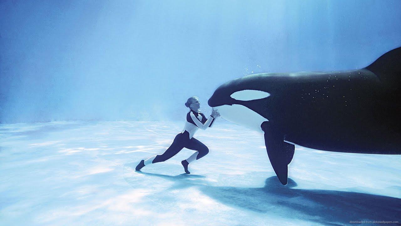 Amid blackfish backlash seaworld to expand orca environments amid blackfish backlash seaworld to expand orca environments youtube altavistaventures Images