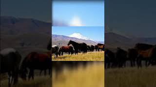 Фотографии коней