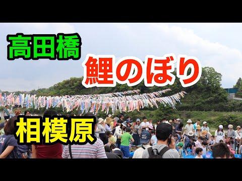 【今年で最後】高田橋こいのぼり【2019年】【相模原】