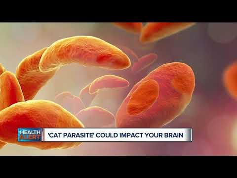 Cat Parasite Could Impact Your Brain