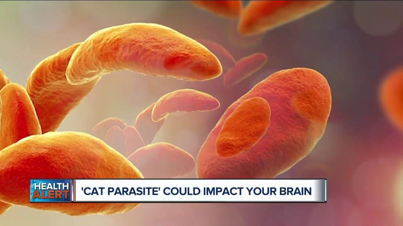 a toxoplazmózis inkubációs periódusa az emberekben kb
