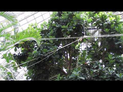 Franklin Park Conservatory - Palm House
