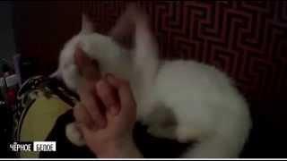 Отношения кота к средниму пальцу руки.