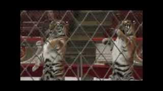 Московский цирк Никулина(, 2013-10-24T09:56:10.000Z)