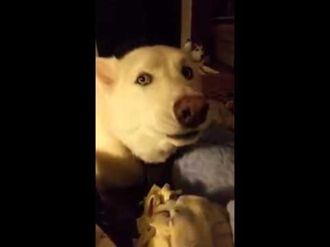 funny singing dogs