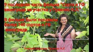 9 часть фильма ''Сорта и ГФ винограда на участке Пузенко Натальи Лариасовны''