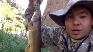 рыбалка на османа. алматинская область казахстан