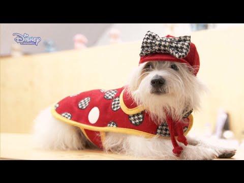 Modowe wyzwanie Minnie | Ubranko dla psa| Disney Channel Polska