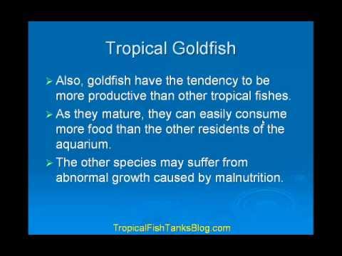 Tropical Goldfish