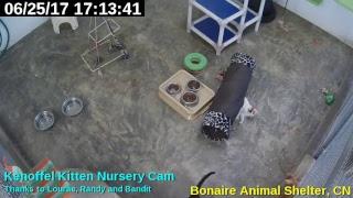 ASB Kittencam Live Stream thumbnail