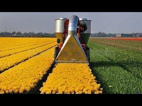 Удивительная сельскохозяйственная техника и невероятные уборочные машины