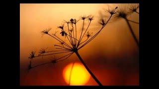 Скачать Gayatri Mantra By Deva Premal
