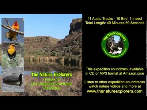 Channeled Scablands Expedition Soundtrack Birds, Insects, Washington Wildlife Nature Sounds MP3