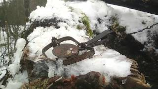Фильм про охоту на куницу капканами