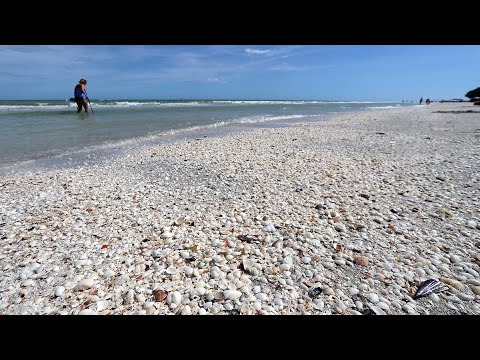 Shell Hunting Fail Sanibel Island Florida