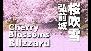 桜吹雪の弘前公園 Cherry Blossom blizzard of Hirosaki Park 青森観光