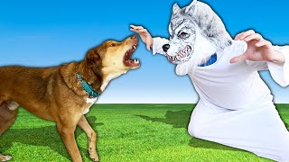 Dogs React to Scary Halloween Costumes! (Hillarious) PawZam Dog