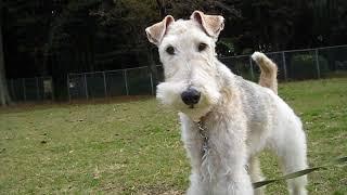 公園で愛犬と駆けっこしました。